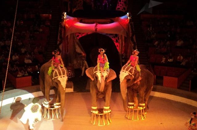 Слоны на арене сочинского цирка