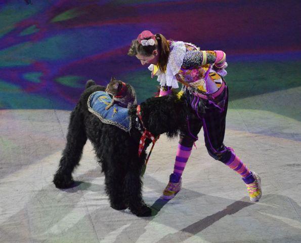 Представление в цирке г. Сочи