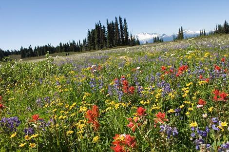 Красная Поляна весной - цветущая долина